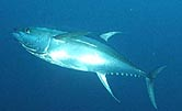 Scientists Pinpoint Source of Mercury in Pacific Ocean Fish