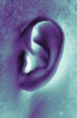 Could Weak Bones, Sudden Hearing Loss Be Linked?